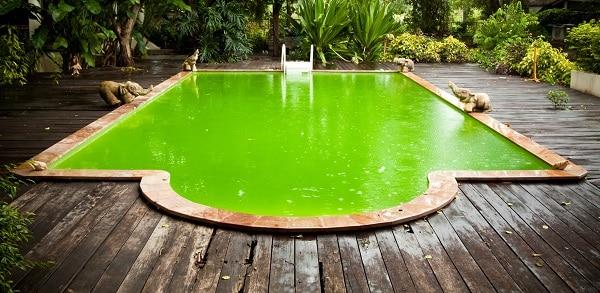 algas piscina color verde