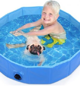 piscina para perro