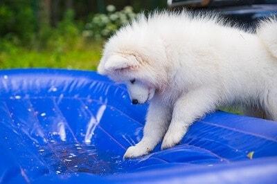 Cómo evitar que se evapore el agua de la piscina