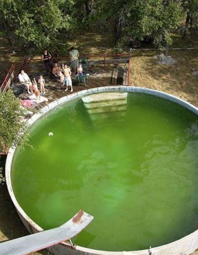 algas en la piscina causas