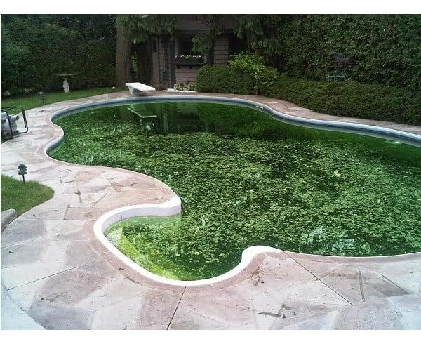 algas piscina
