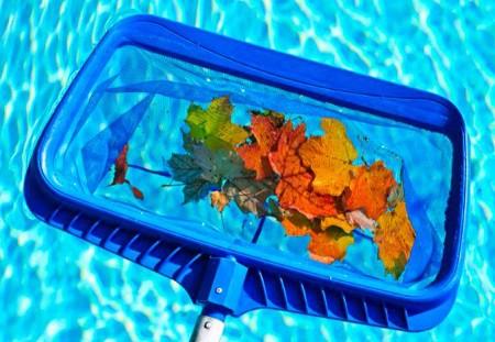 hojas en la piscina