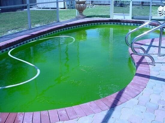 solucion algas piscina